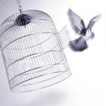bird-free-cage